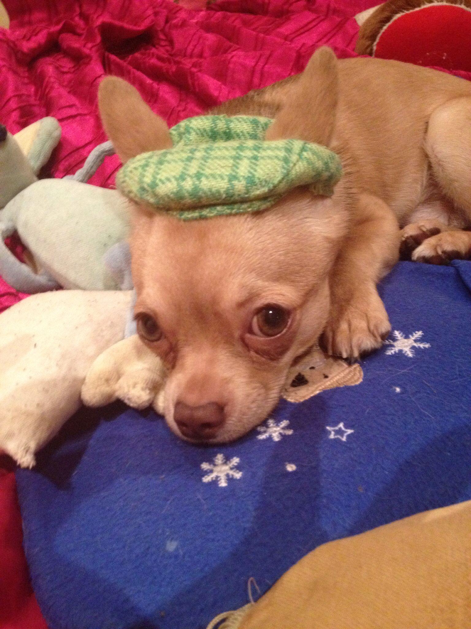 Got my hat,where's my coat?