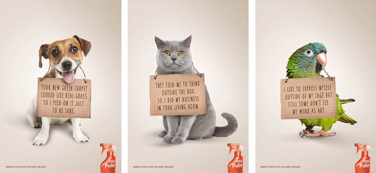 Pro pulir advertising campaign concept print digital pro pulir maison d