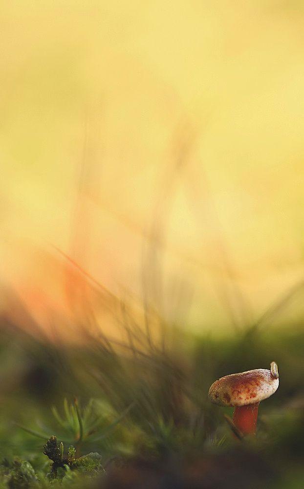Tag der gelagerten Pilze
