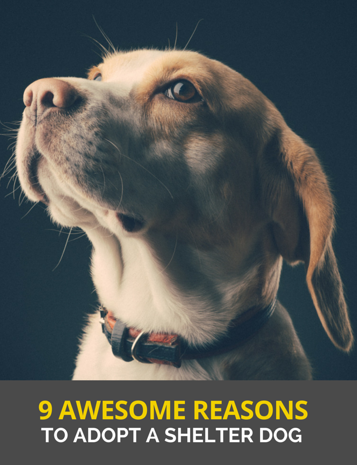 10 Benefits Of Adopting A Rescue Dog Puppy Leaks Rescue Dogs Shelter Dogs Dogs