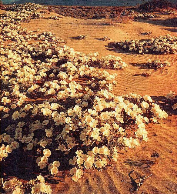 Untitled #desertlife