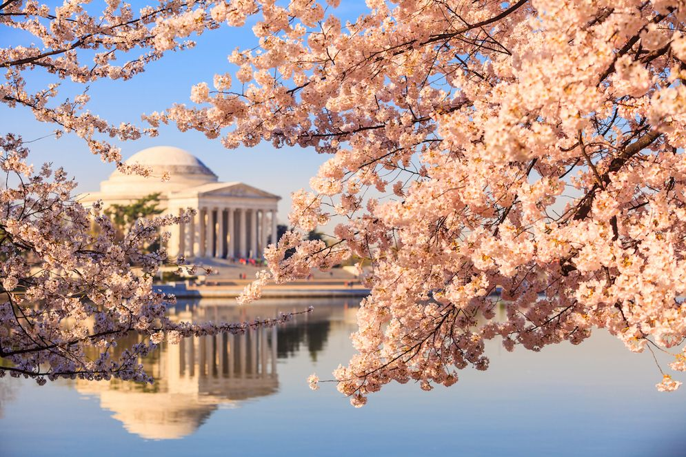 Washington Dc Map National Mall%0A Where to Eat Near the Cherry Blossoms and National Mall