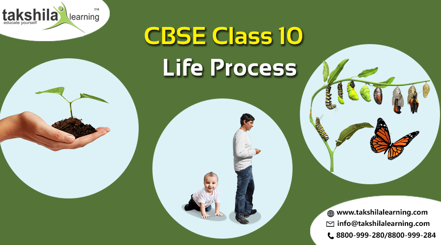 Cbse Class  Science Notes Life ProcessCbse Class  Sample