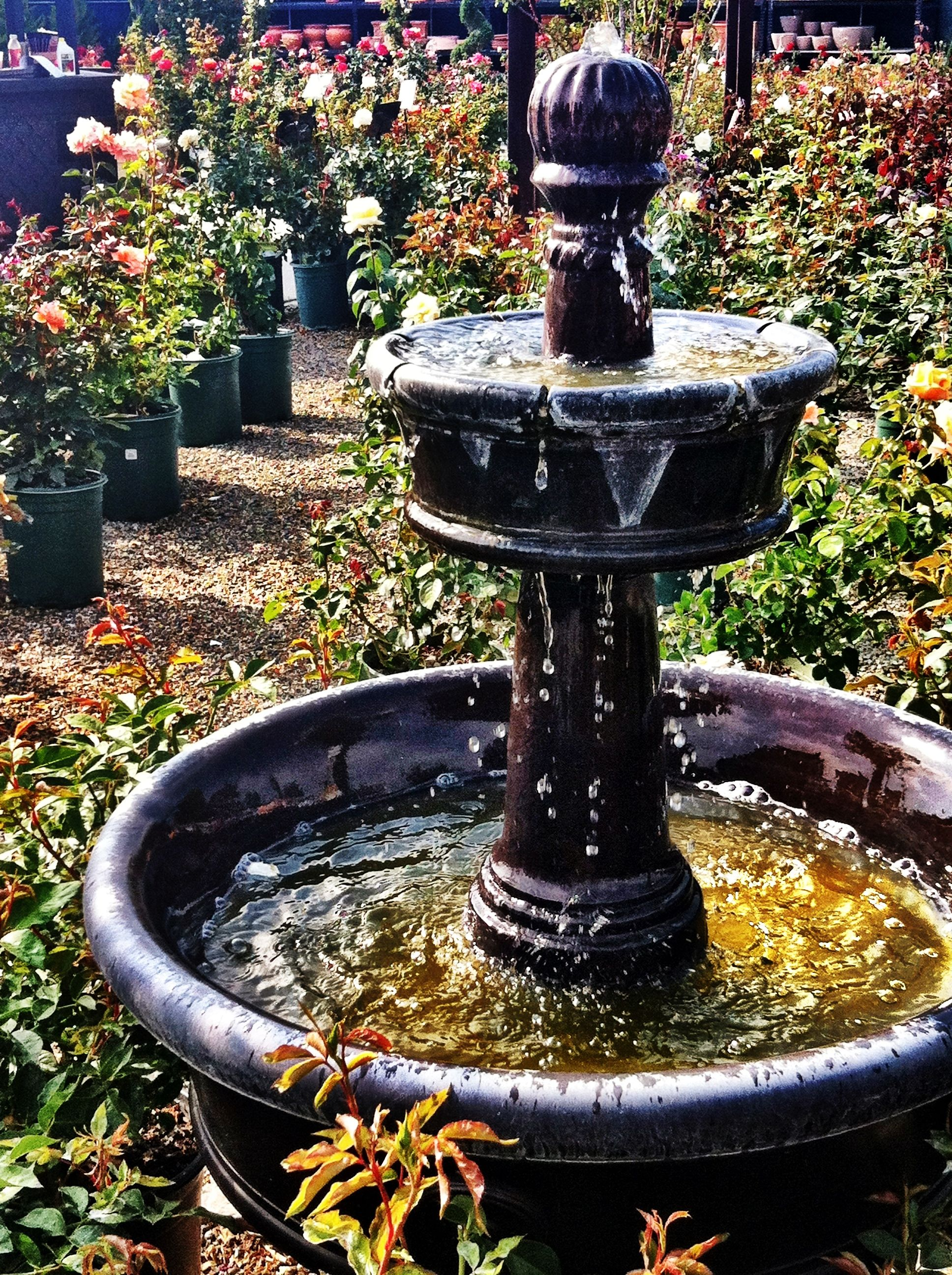 Fountain Display At Rogers Gardens! #rogersgardens #fountain #garden #decor  #iknowboyd
