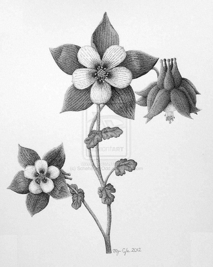 columbine flower by scheheraz on deviantart art pinterest columbine. Black Bedroom Furniture Sets. Home Design Ideas