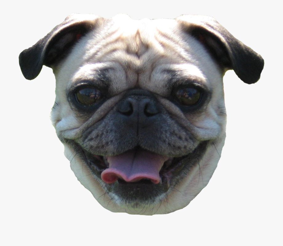 Pug Face Png Pug Face No Background Transparent Cartoon Fanartikel Pug Gesucht Cutout Png Clipart Images Pngfuel Husky Clipart Dog In Cute Pugs Pug Dog Pugs