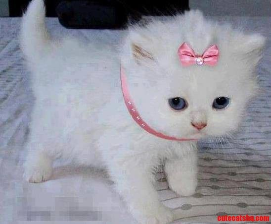 My Princess Too Cute Cute Cats Hq Pictures Of Cute Cats And Kittens Free Pictures Of Funny Cats And Photo Of Cute Kittens Kittens Cutest Cats And Kittens Cute Animals