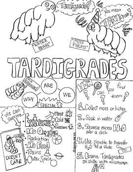 Tardigrades aka Water Bears Sketch Notes W/Teacher's Guide