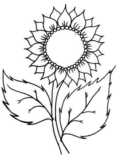 Gambar Flora Yang Mudah Digambar : gambar, flora, mudah, digambar, Gambar, Bunga, Sakura, Mudah, Digambar-, Contoh, Sketsa, Digambar, Modern, Home…, Lukisan, Matahari,, Ilustrasi, Sakura,