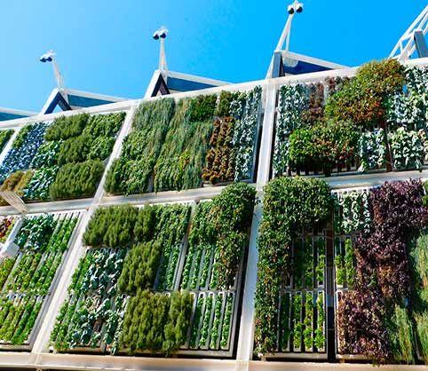 Cómo hacer un jardín vertical casero Hace años estuvimos de visita