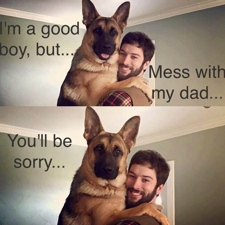 The German Shepherd Say Bye Bye To Any Privacy Ever Again