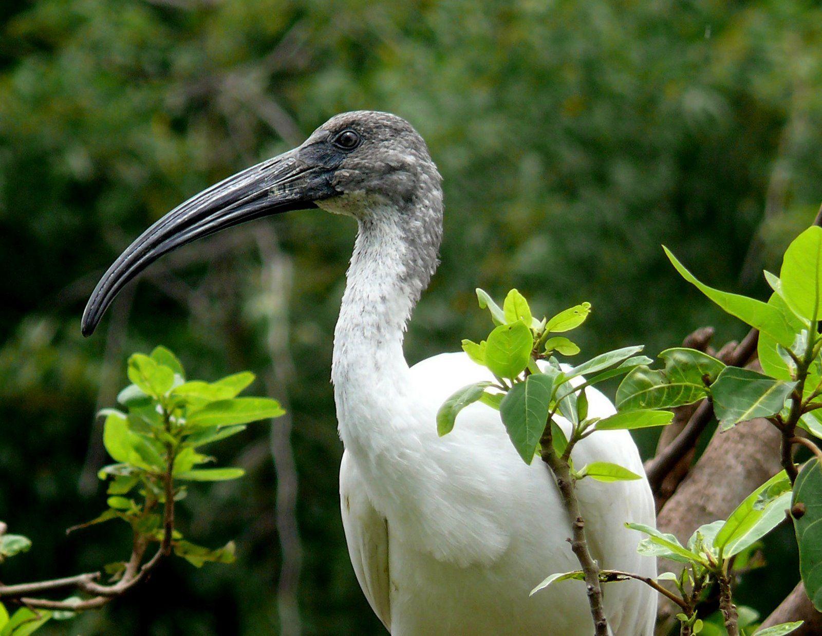 Pin by Kadamb Kunj Resort on Bharatpur Bird Sanctuary