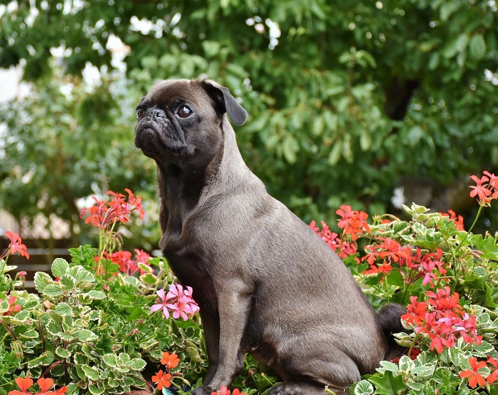 Park Art My WordPress Blog_Whats The Best Dog Food For Pugs