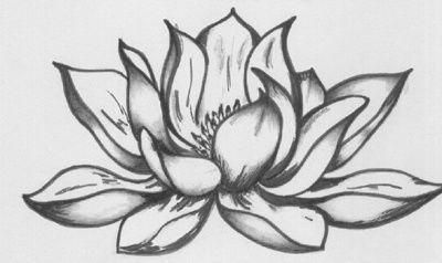 Lotus Flower Drawing 45x30 Cm 2008 By Katarina Svedlund