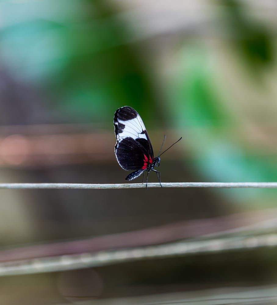 Butterfly Balancing by Aric Jaye on 500px