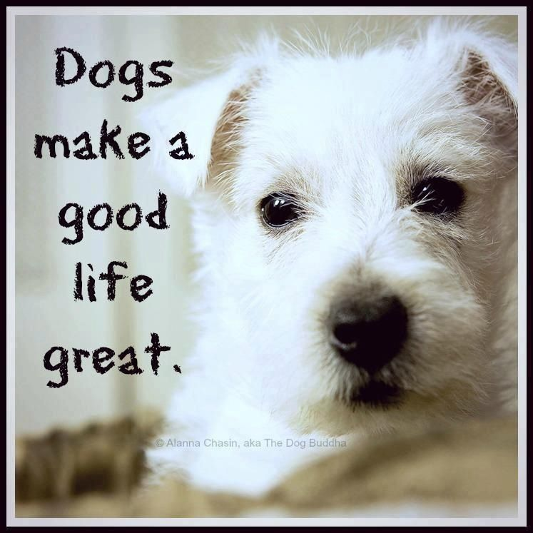 Agreed dogs dogs pooping baby dogs