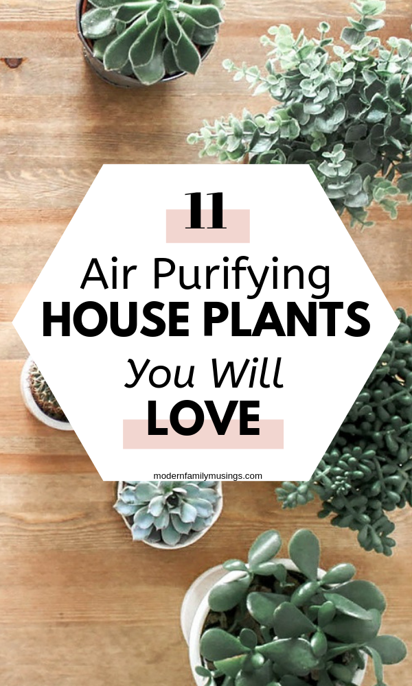 11 Best Air Purifying Indoor Plants That Grow In Low Light