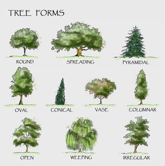 Landscaping trees the diagram shows different forms of for Garden trees types
