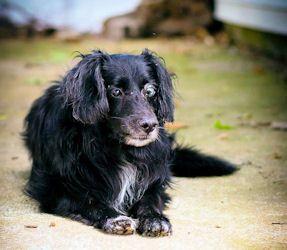pets adoption information