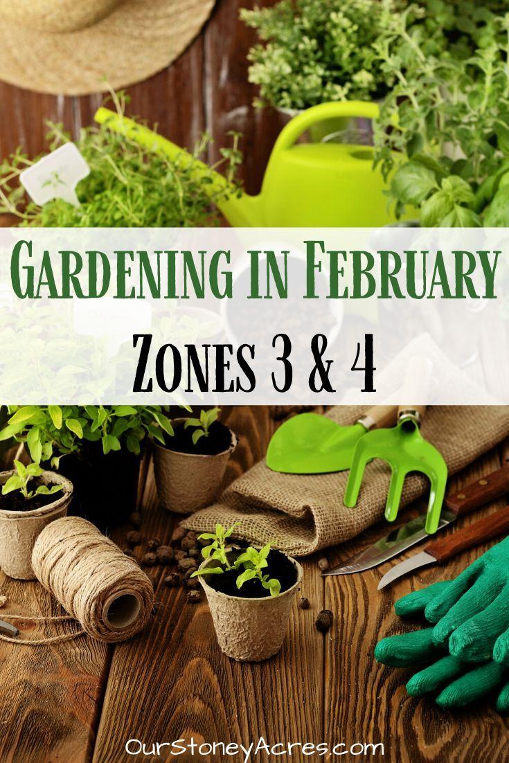 Gardening In February In Zones 3 4 Herb Garden In Kitchen