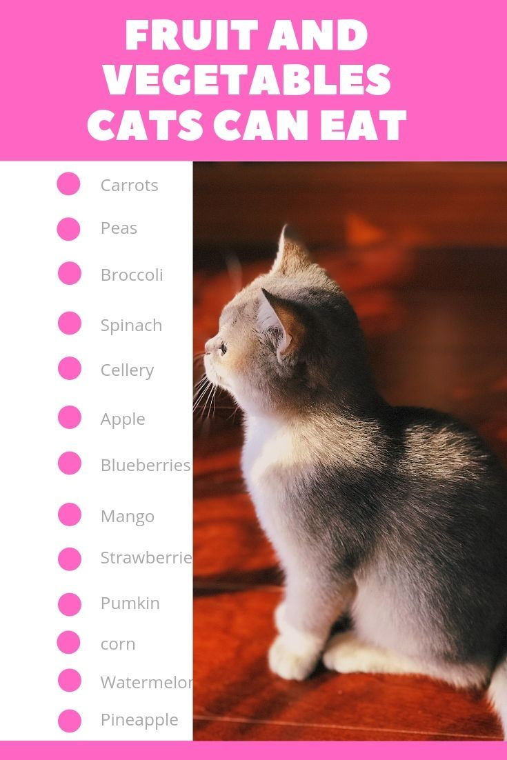Fruit And Vegetables Cats Can Eat Cat Feeding Cat Care Tips Best Cat Food