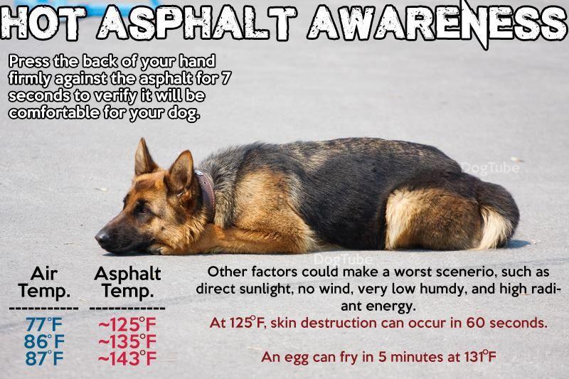 Hot asphalt awareness your dog