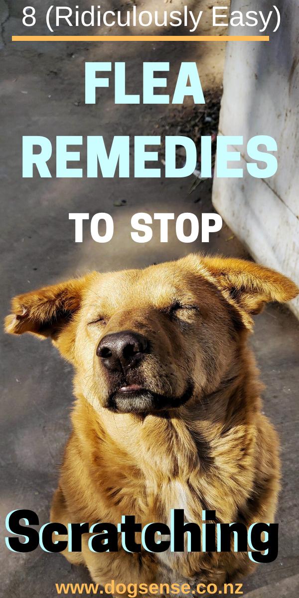 8 Brilliant Flea Remedies For Dogs In 2020 Dog Flea Remedies Flea Remedies Flea Spray For Dogs
