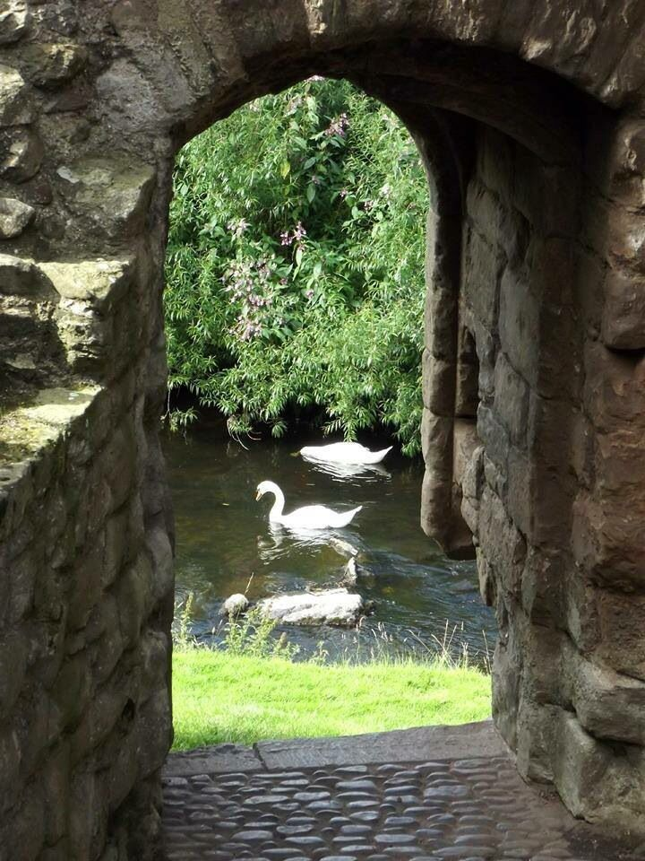 A Swan Pond At The Edge Of The Garden