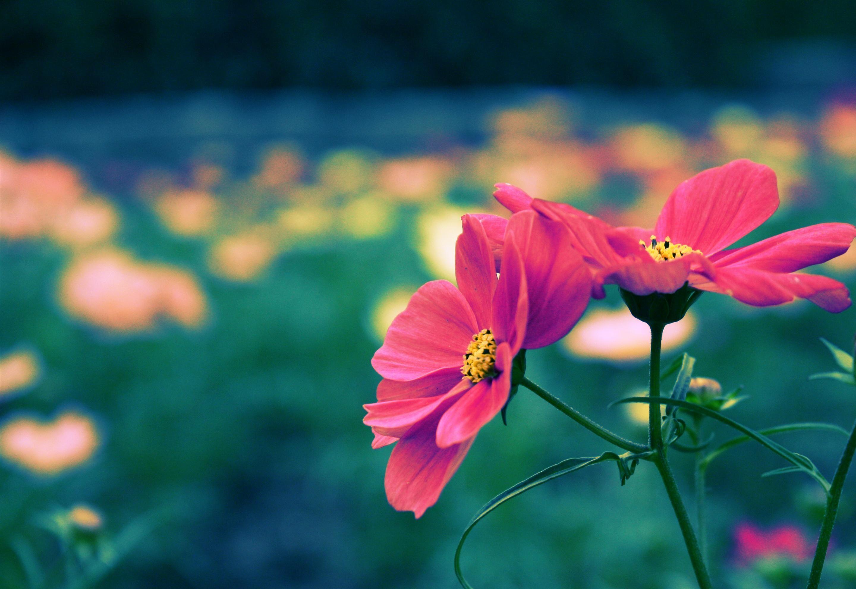 Iphone wallpaper pretty personalized fotos lindas flores lindo