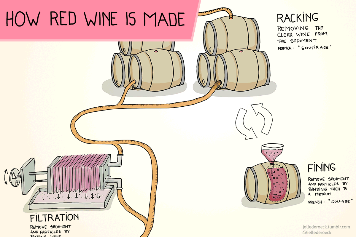 How Red Wine Is Made Step By Step Wine Folly Wine Folly Red Wine Infographic Wine Making