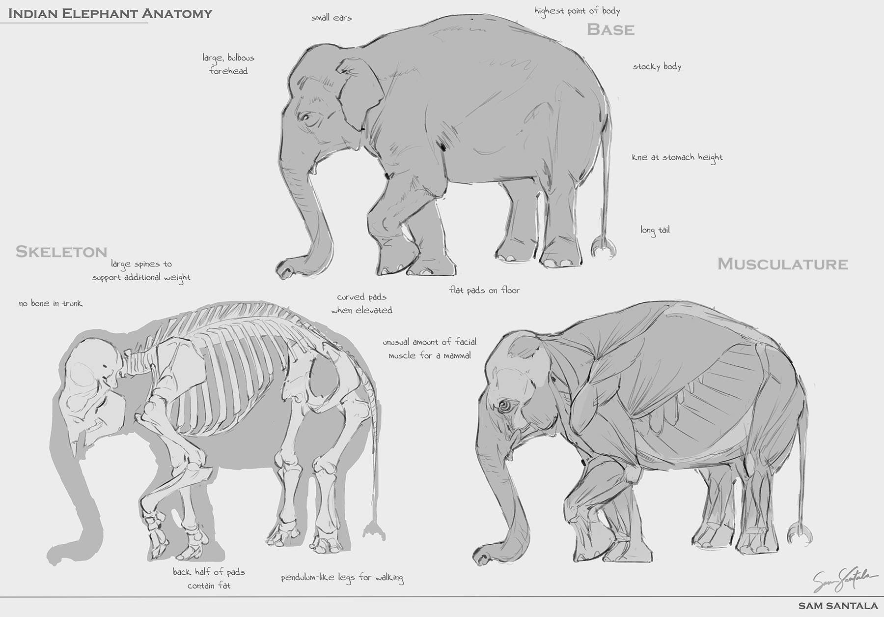 Colorful Asian Elephant Anatomy Pattern - Physiology Of Human Body ...
