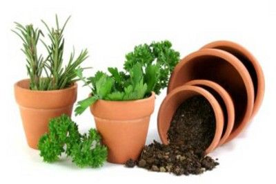 Отглеждане на млади растения