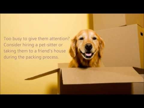 Moving Tips Relocating With Your Pets Budget Van Lines Moving Tips Moving Day Moving Checklist