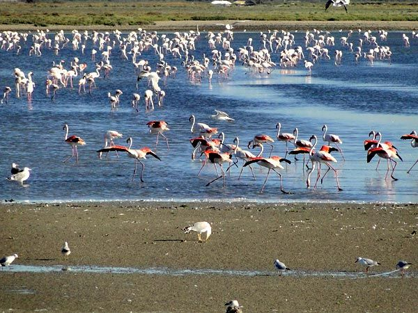 Camargue. On my 'To Visit' list!