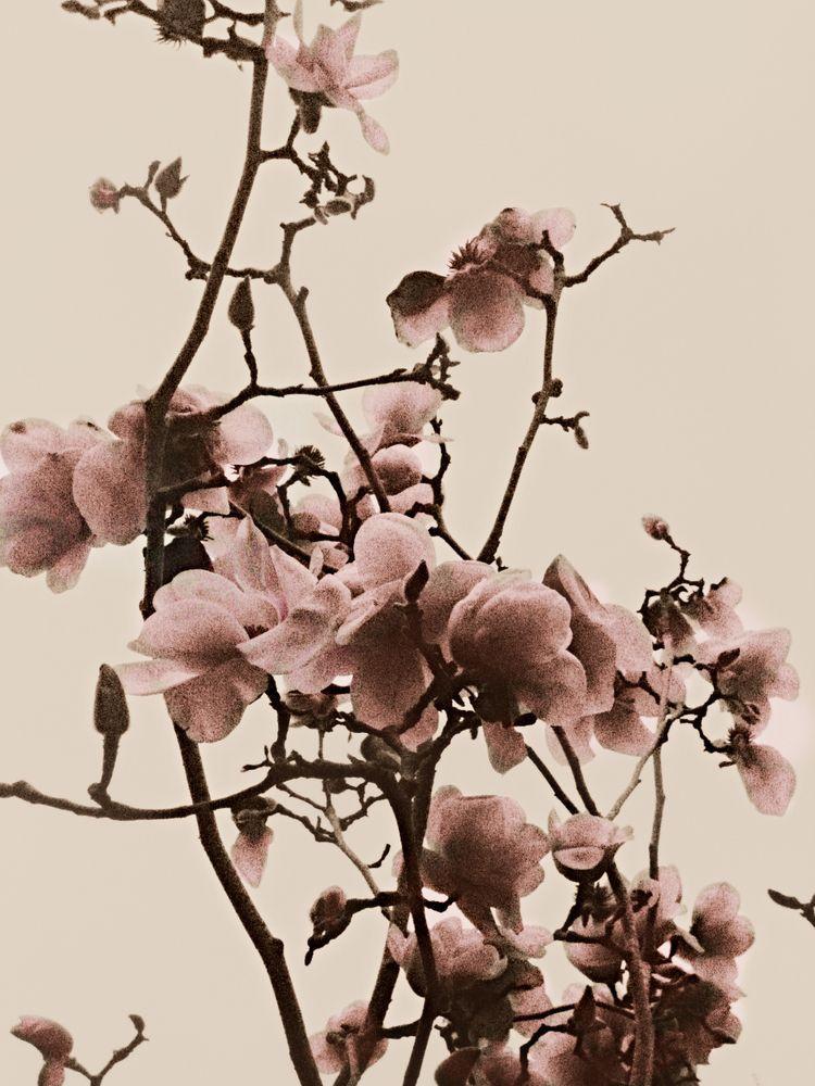 Pin By Jonathan Gonzalez Capellan On Beauty Project Board Most Beautiful Flowers Beautiful Flowers Girl Flower Tattoos