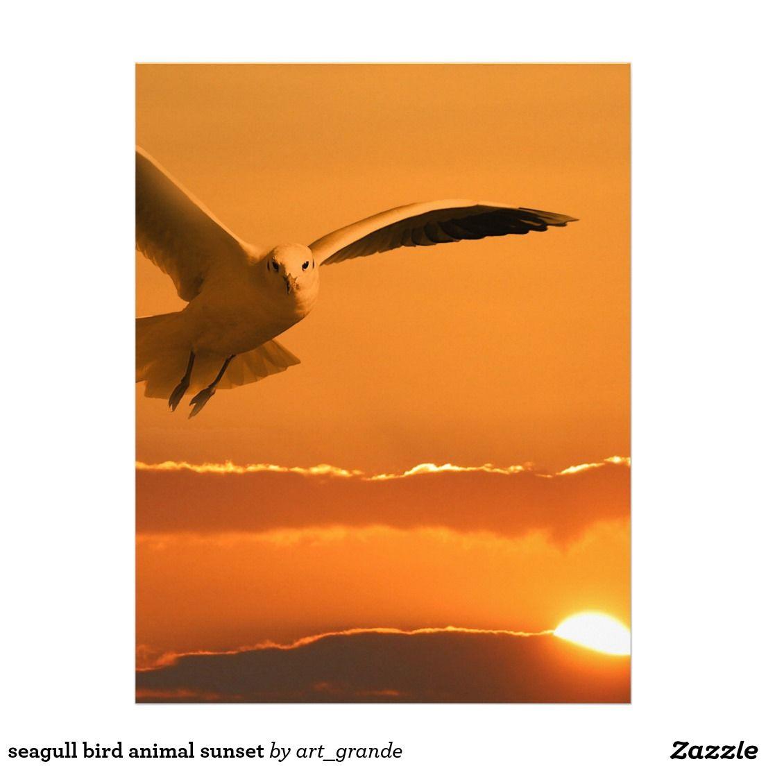 Seagull Bird Animal Sunset Letterhead Animals Pinterest Sunset
