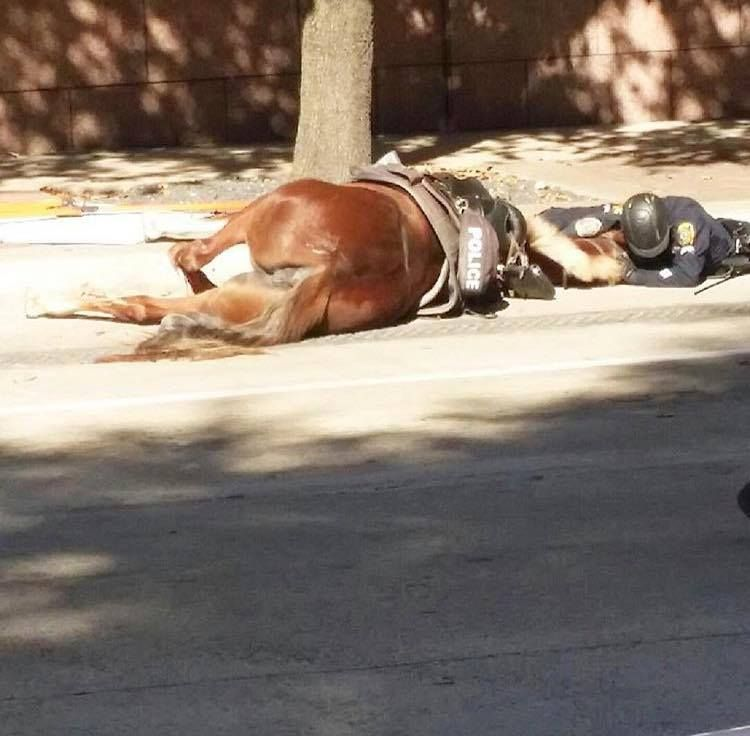 Houston Mounted officer comforts and loves his devoted partner after being hit by a truck and drawing her last breaths