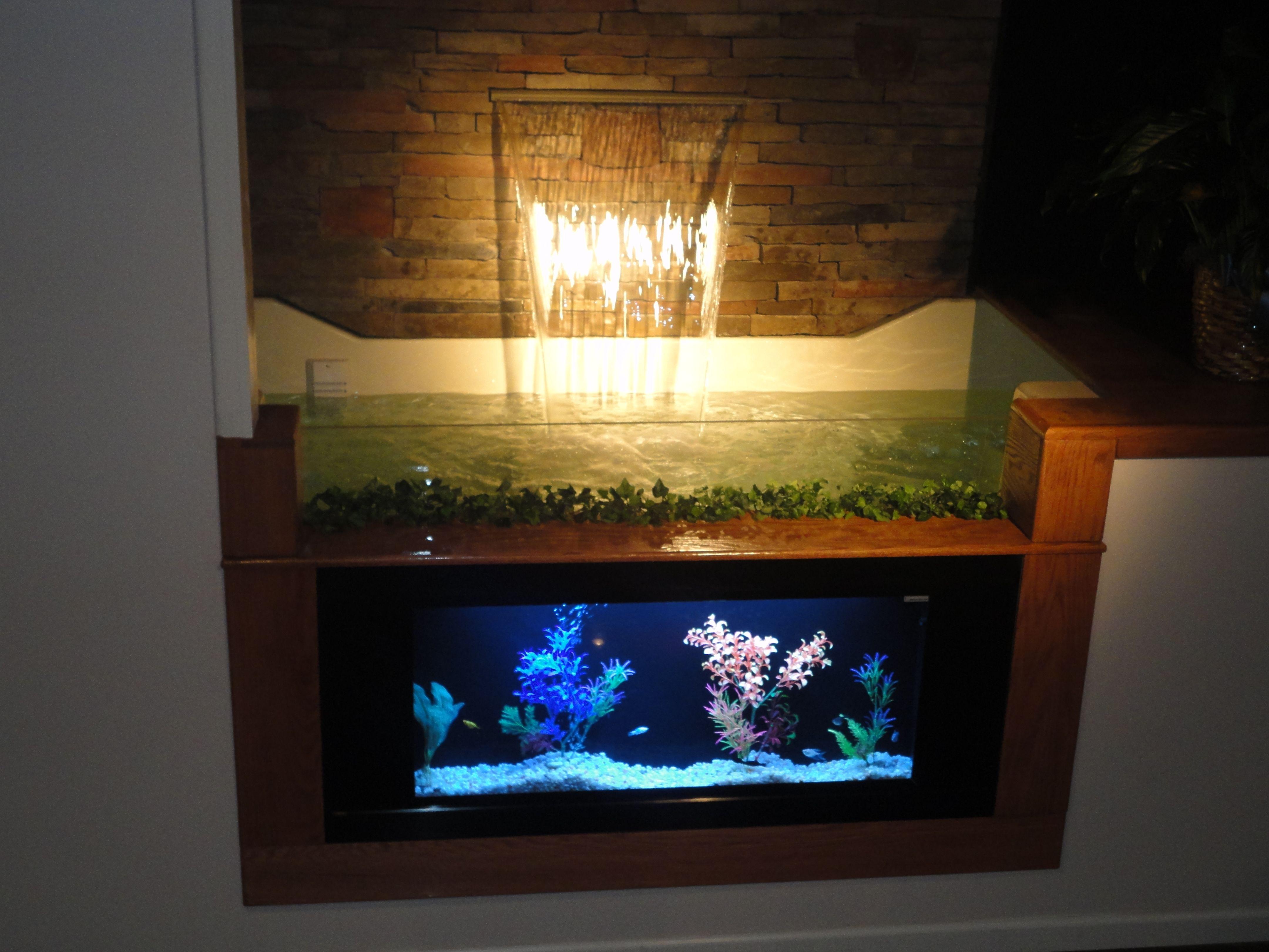 Fish aquarium information - Aquariums