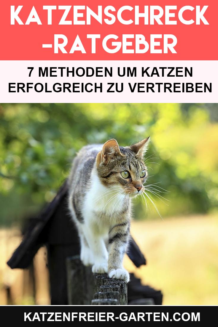 Katze Aus Dem Garten Vertreiben In 2020 Katzen Vertreiben Schreck