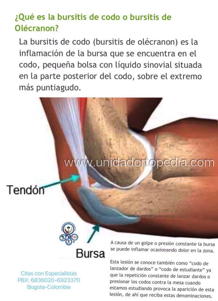 Excepcional Anatomía Del Codo Conjunta Ppt Motivo - Anatomía de Las ...