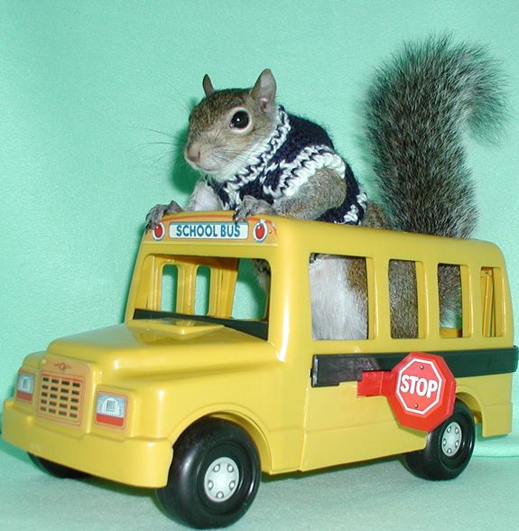 Image result for squirrel bus