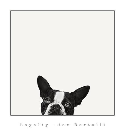 Loyalty Art Jon Bertelli Allposters Com Dog Wall Art Framed Art Prints Posters Art Prints