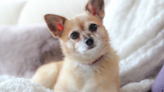 Pampered Pets And Dog Grooming In Saint Paul Pamper Pets Dog