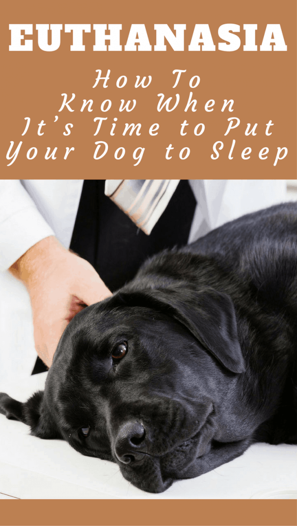 When To Put Your Dog Down Tips How To Know It S Time To Euthanize A Dog Putting Dog To Sleep Senior Dogs Care Elderly Dogs