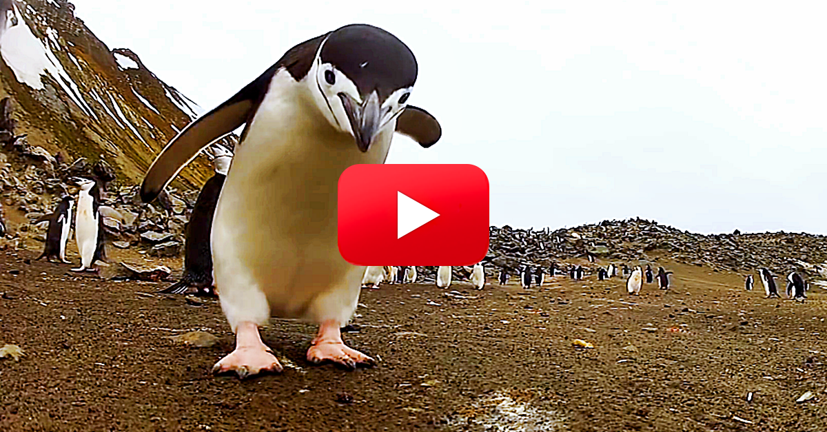 You Haven't Seen Happy Feet Until You've Seen This Real-Life Penguin Dance Party — You'll Be ROFLing By the End! | The Rainforest Site Blog