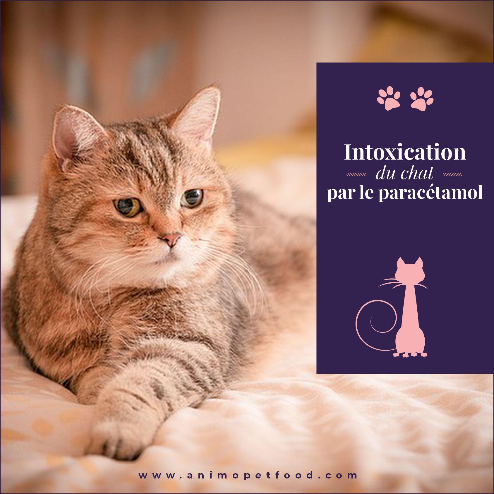 Intoxication Du Chat Par Le Paracetamol Animaux Chat Animaux De Compagnie