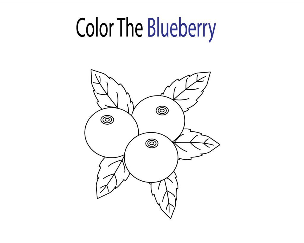 Blueberry Coloring Pages Coloring Pages Free Coloring Pages Color
