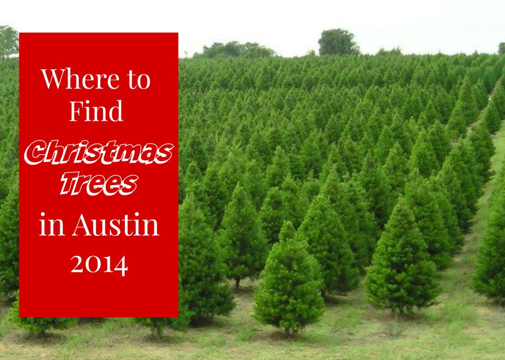Where To Find Live Christmas Trees In Austin Texas Live Christmas Trees Tree Texas Bucket List