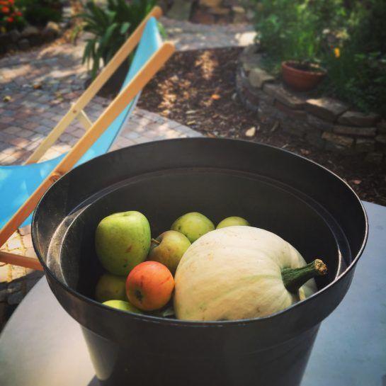 Apfelernte verwerten: Apfelkuchen mit Vanillepudding (Gärtnerinnenblog) #Äpfelverwerten Apfelernte verwerten: Apfelkuchen mit Vanillepudding #Äpfelverwerten