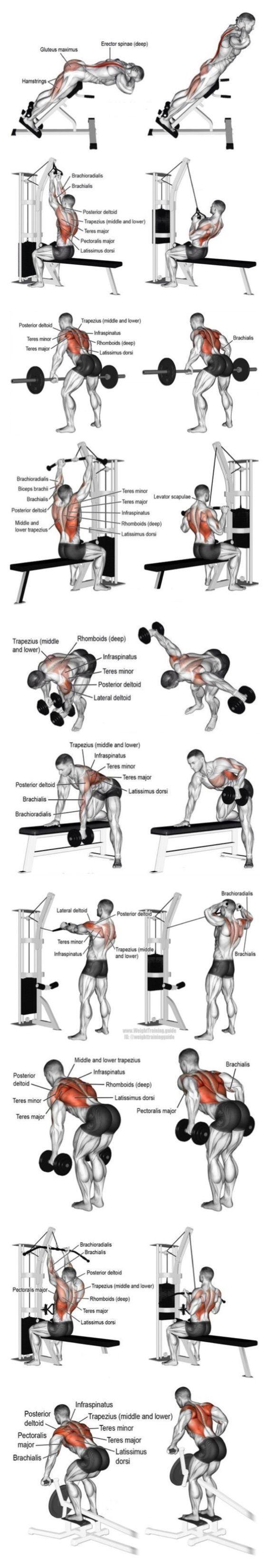 Bodybuilding-Fitnessübungen, um Ihre Muschel zu formen. BodyCraft Fitnessgeräte … - Fitness #exerciseequipment